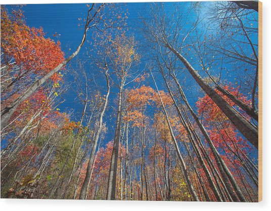 Reaching Color Wood Print by Scott Moore