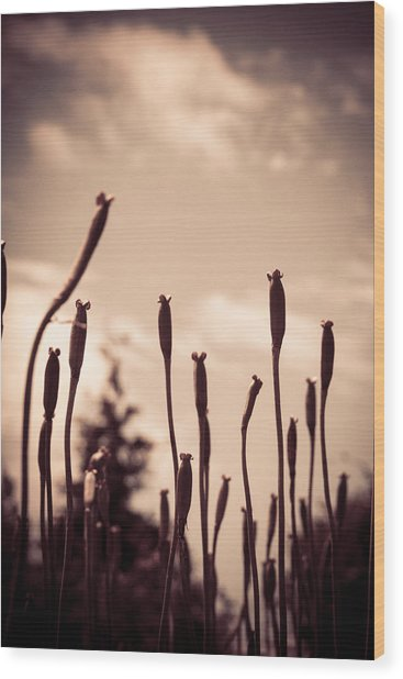 Flowers Reaching For The Sky Wood Print