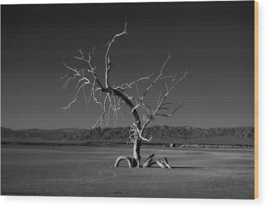 Wood Print featuring the photograph Reaching by Mike Trueblood