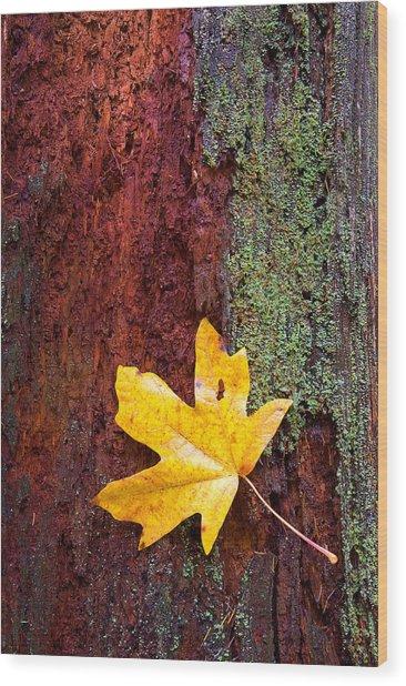 Reclamation Wood Print