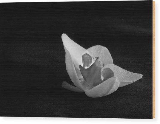 Reclining Orchid Wood Print