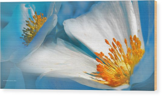 Recuerdos De La Primavera Wood Print