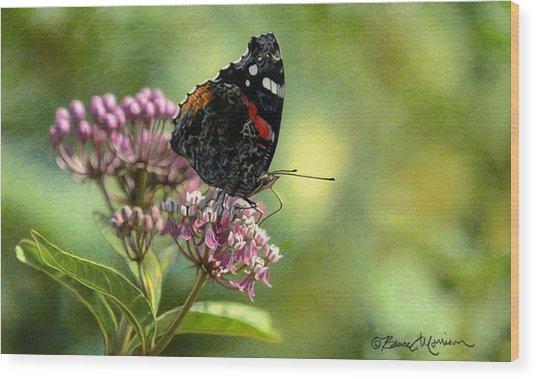 Red Admiral On Swamp Milkweed Wood Print