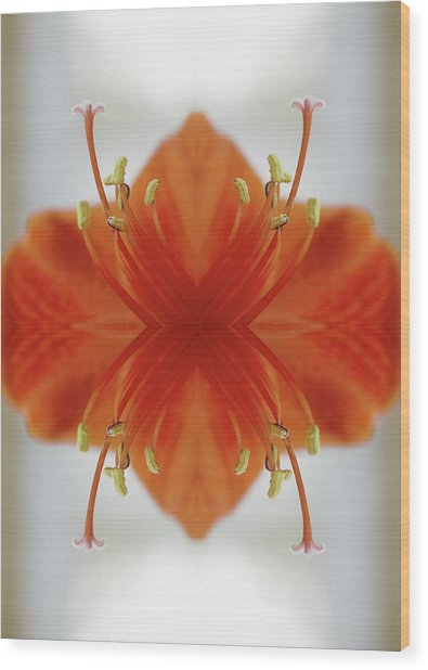 Red Amaryllis Flower Wood Print by Silvia Otte