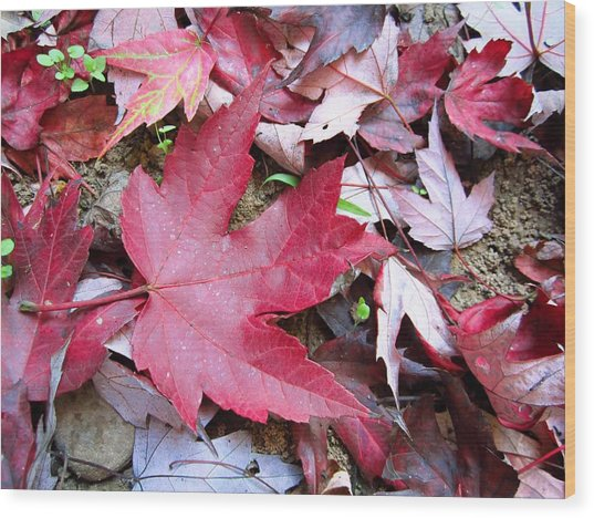 Red And Green Of Fall Wood Print