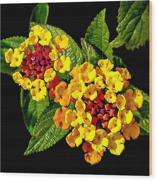 Red And Yellow Lantana Flowers With Green Leaves Wood Print