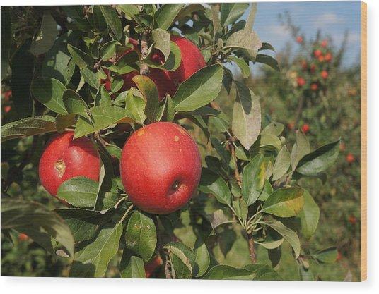 Red Apple Growing On Tree Wood Print