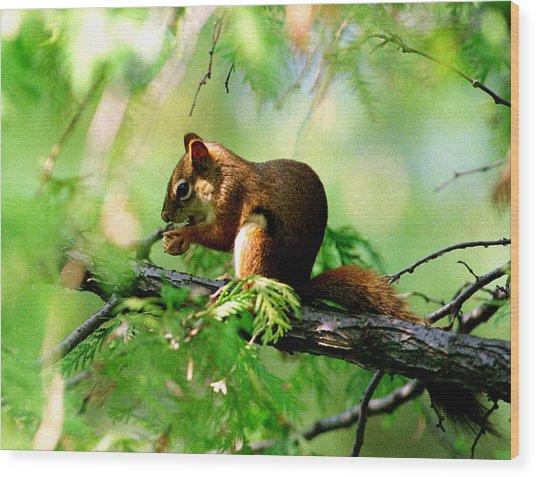 Red Aquirrel Wood Print