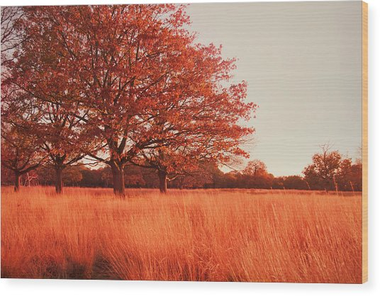 Red Autumn Wood Print