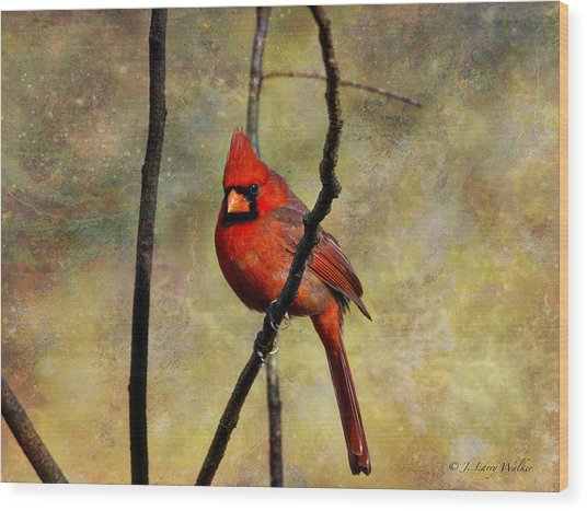 Red Beauty Wood Print
