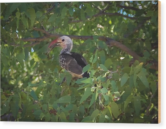 Red Billed Hornbill Wood Print