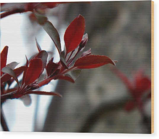 Red Blossom Wood Print by Wild Thing