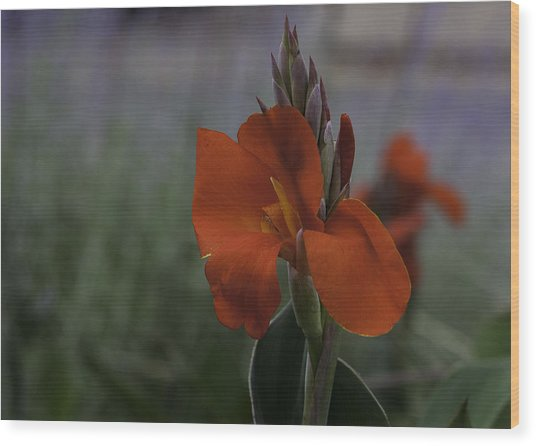 Red Canna Wood Print by Martha Burger