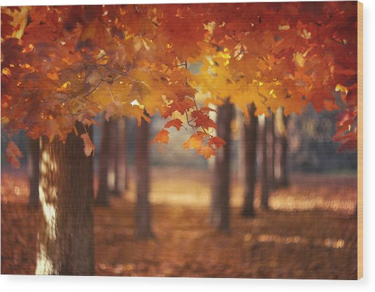 Red Canopy Wood Print