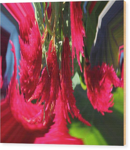 Red Celosia Plumosa  Wood Print by Rhonda Humphreys
