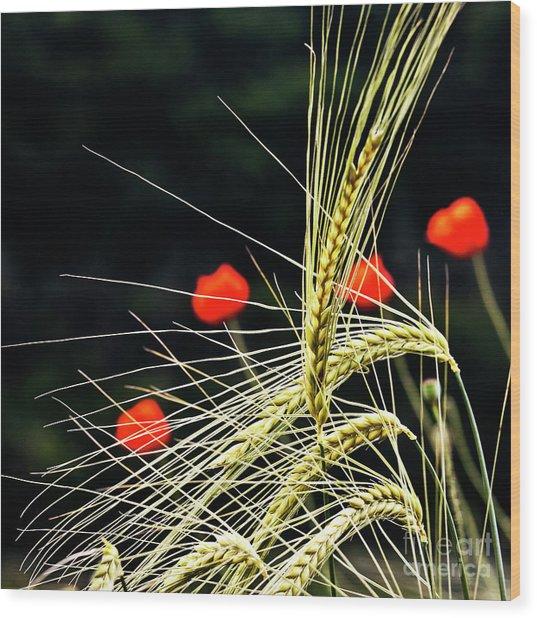 Red Corn Poppies Wood Print