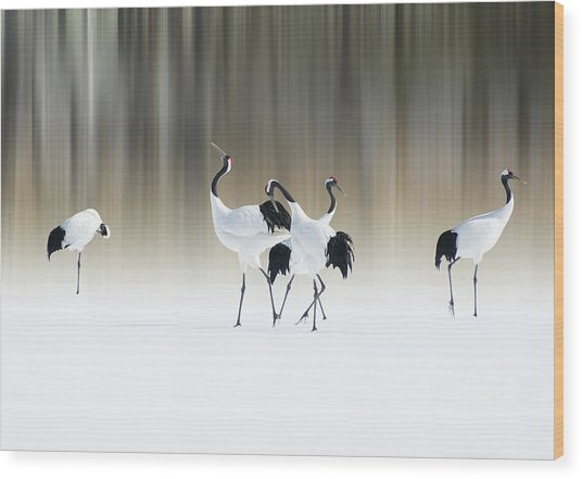 Red-crested White Cranes Wood Print