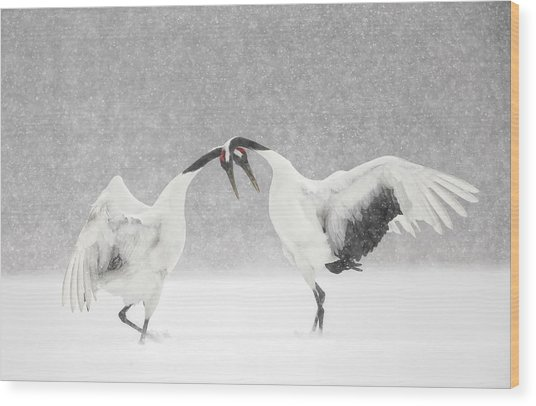 Red Crowned Crane Courtship Dance Wood Print