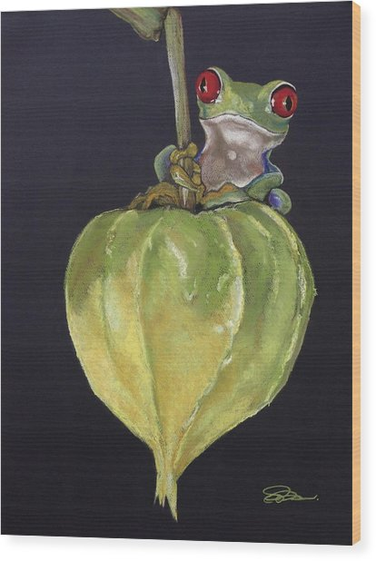 Red-eyed Tree Frog On Seed Pod Wood Print
