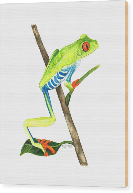 Red-eyed Treefrog From La Selva Wood Print