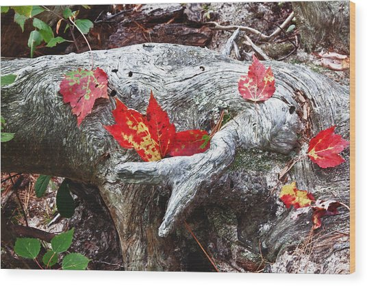 Red Fall Against Grey Wood Print