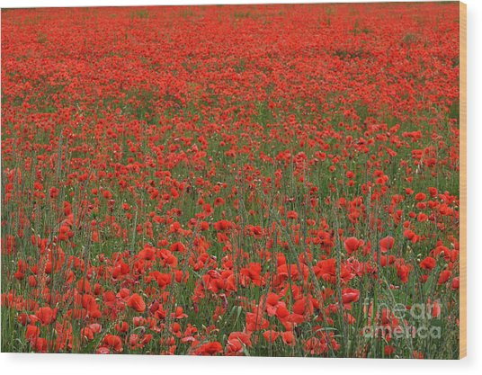 Red Field Wood Print