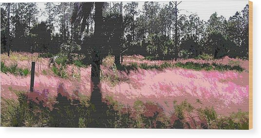 Red Fire Grass Field Gulf Coast Florida Wood Print