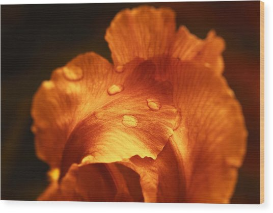 Red Flower Closeup Wood Print