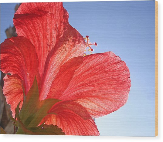 Red Flower In The Sun By Jan Marvin Studios Wood Print