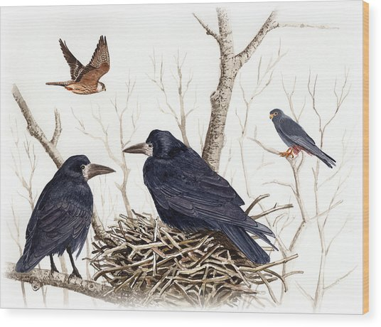 Red-footed Falcon Wood Print by Deak Attila