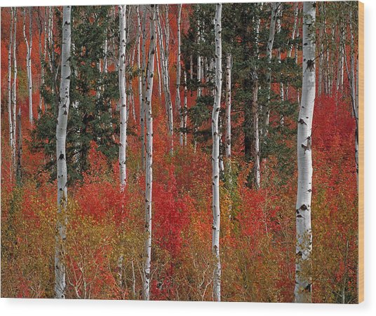 Red Forest Wood Print by Leland D Howard