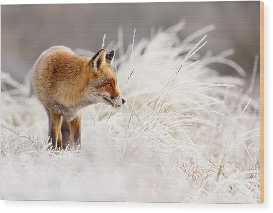 Red Fox And Hoar Frost _ The Catcher In The Rime Wood Print