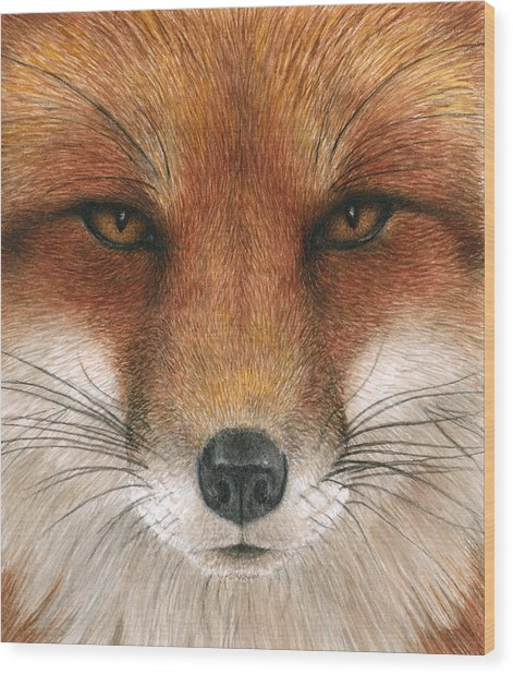 Red Fox Gaze Wood Print