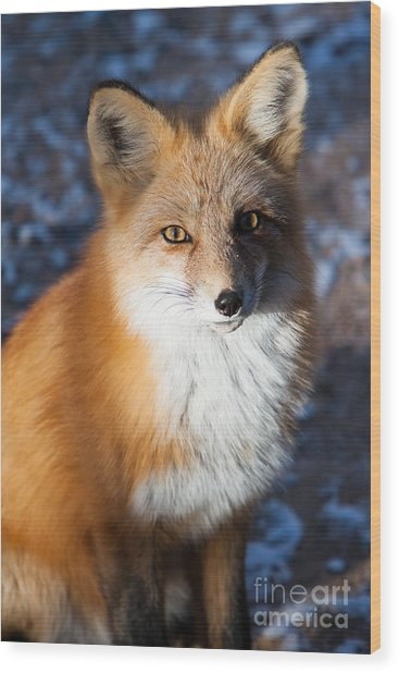 Red Fox Standing Wood Print
