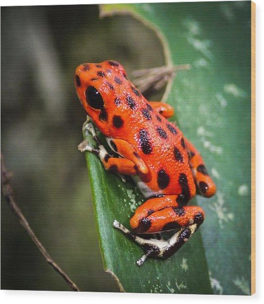 Red Frog Beach Wood Print