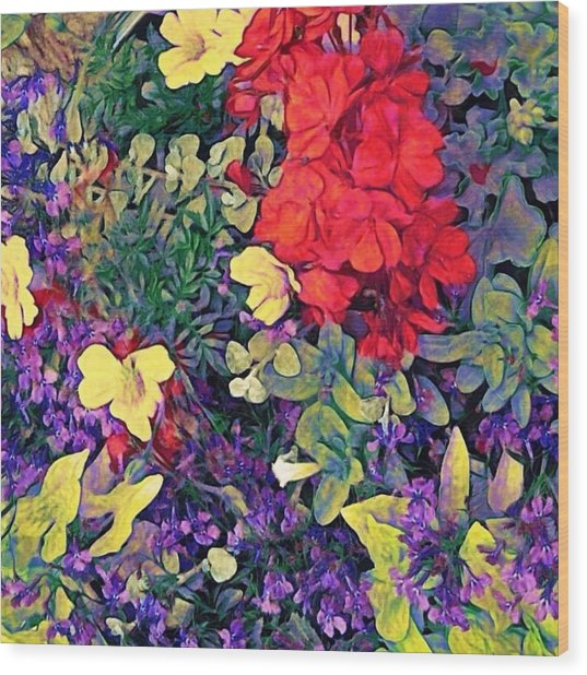 Red Geranium With Yellow And Purple Flowers - Square Wood Print