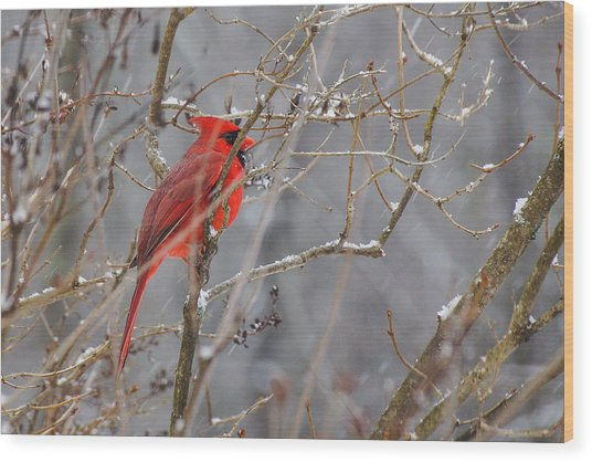 Red Hot In A Snowstorm Wood Print