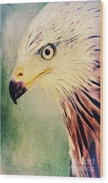 Red Kite Art Wood Print