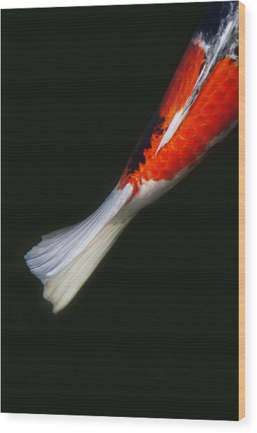 Red Koi Tail Down Vertical Wood Print