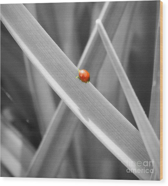 Red Ladybird Wood Print