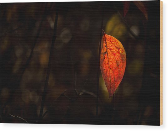 Red Leaf 2 Wood Print