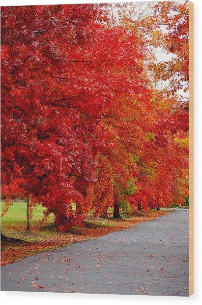 Red Leaf Road Wood Print