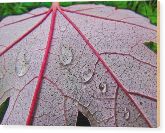 Red Leaf With Raindrops Wood Print