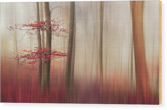 Red Leaves. Wood Print