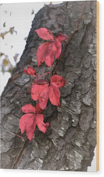 Red Leaves On Bark Wood Print
