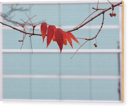 Wood Print featuring the photograph Red Leaves by Viviana  Nadowski