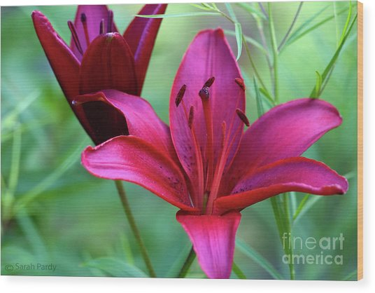 Red Lillies Wood Print
