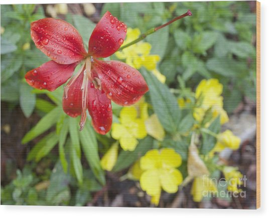 Red Lily And Yellow Buttercups Wood Print by Jonathan Welch