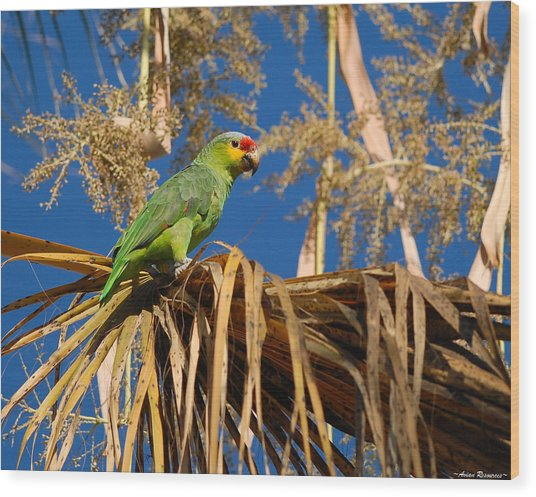 Red-lored Amazon In Palm Wood Print