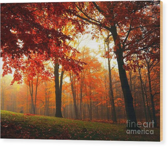 Red Maple Forest Wood Print